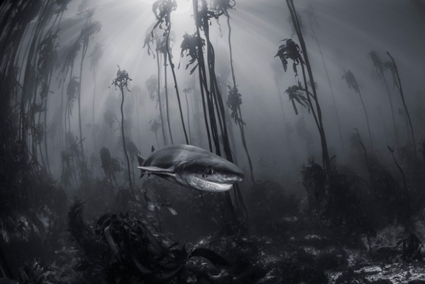 Tracey Jennings/ National Geographic Travel Photographer of the Year Contest. Mystical Forest. Le Cap, Afrique du Sud.