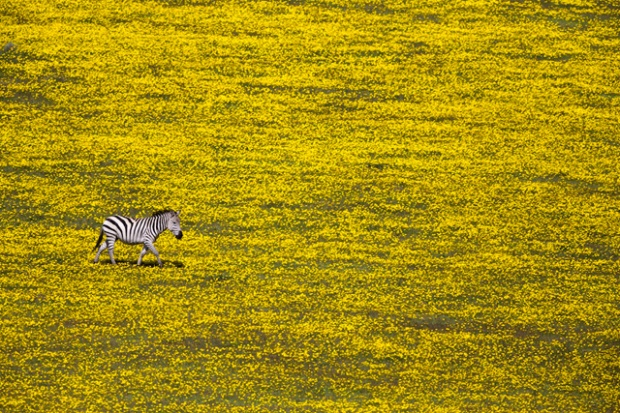 Yuval Ofek/ National Geographic Travel Photographer of the Year Contest ...but I am not the only one. Serengeti National Park, Tanzanie, Afrique.
