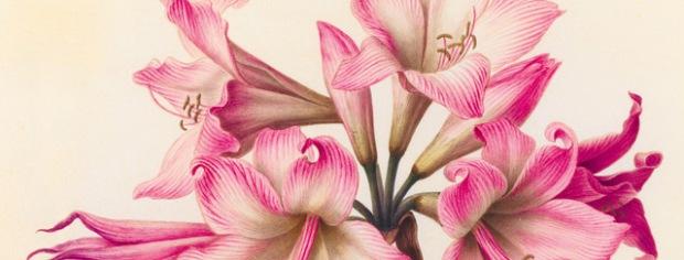 inspirationsgraphiques-aquarelles-gouaches-illustration-museum-histoire-naturelle-velins-paris-art-01