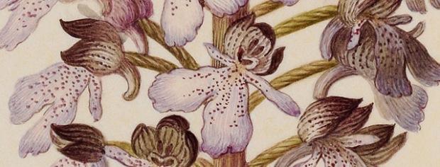 inspirationsgraphiques-aquarelles-gouaches-illustration-museum-histoire-naturelle-velins-paris-art-02
