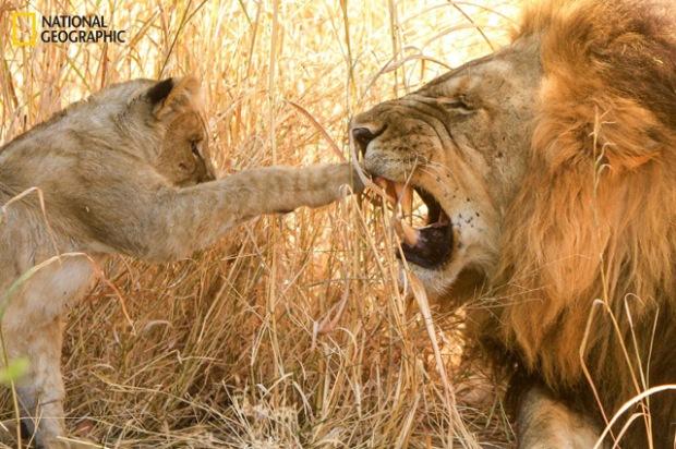 "P. Kuhn, ""Never bother Dad when he's sleeping"", Botswana"