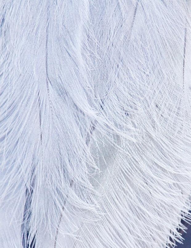 Inspirationsgraphiques-Photographie-animaliere-Thomas-Lohr-Birds-macro-photo-oiseaux-exotiques-02