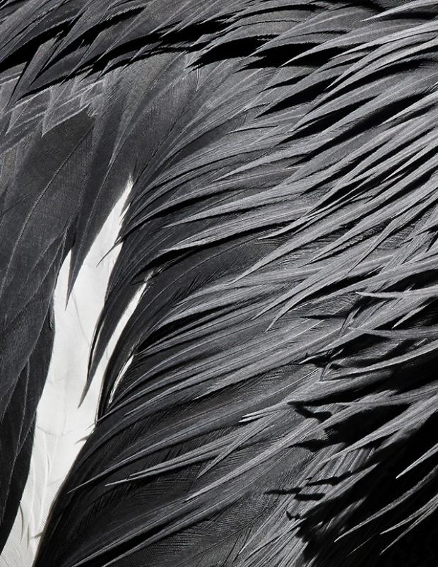 Inspirationsgraphiques-Photographie-animaliere-Thomas-Lohr-Birds-macro-photo-oiseaux-exotiques-04