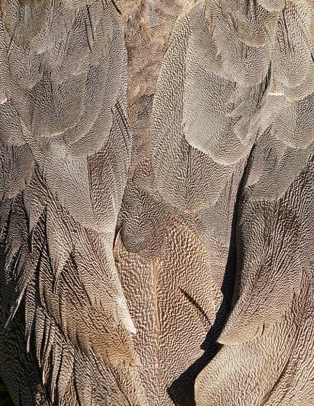 Inspirationsgraphiques-Photographie-animaliere-Thomas-Lohr-Birds-macro-photo-oiseaux-exotiques-08