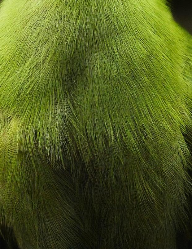 Inspirationsgraphiques-Photographie-animaliere-Thomas-Lohr-Birds-macro-photo-oiseaux-exotiques-09