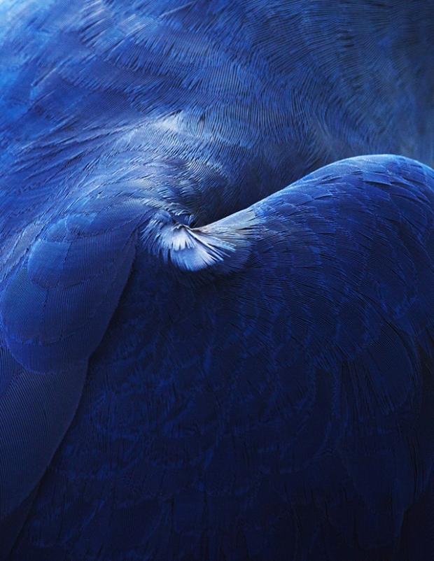 Inspirationsgraphiques-Photographie-animaliere-Thomas-Lohr-Birds-macro-photo-oiseaux-exotiques-10