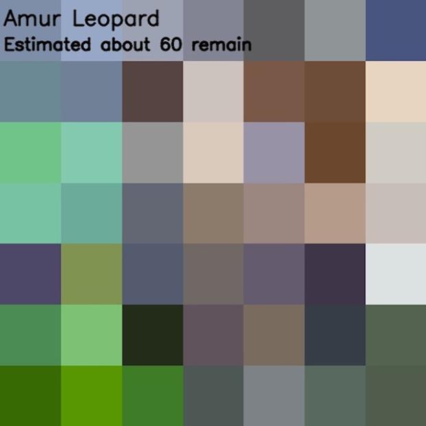 Inspirationsgraphiques-ecologie-WWF-artiste-JJSmooth44-photographie-animaliere-pixel-espece-menacee-preservation-sensibilisation-02