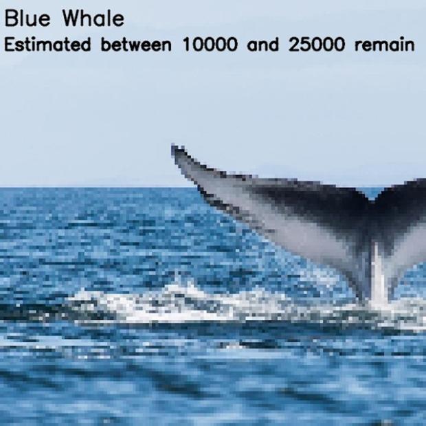 Inspirationsgraphiques-ecologie-WWF-artiste-JJSmooth44-photographie-animaliere-pixel-espece-menacee-preservation-sensibilisation-04