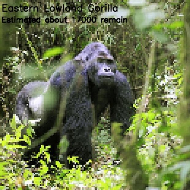 Inspirationsgraphiques-ecologie-WWF-artiste-JJSmooth44-photographie-animaliere-pixel-espece-menacee-preservation-sensibilisation-05