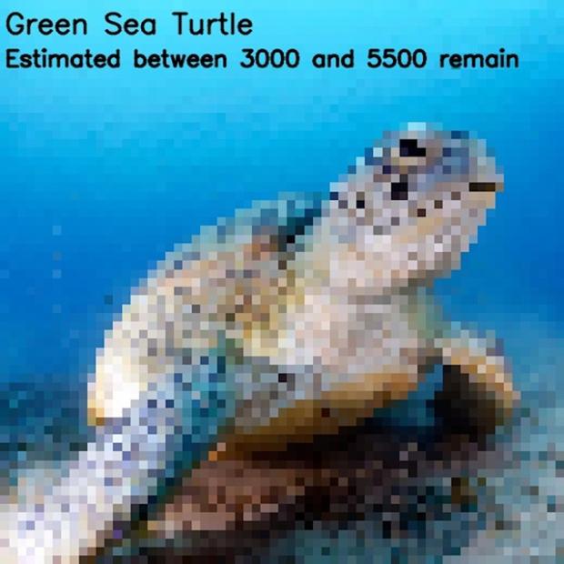 Inspirationsgraphiques-ecologie-WWF-artiste-JJSmooth44-photographie-animaliere-pixel-espece-menacee-preservation-sensibilisation-06