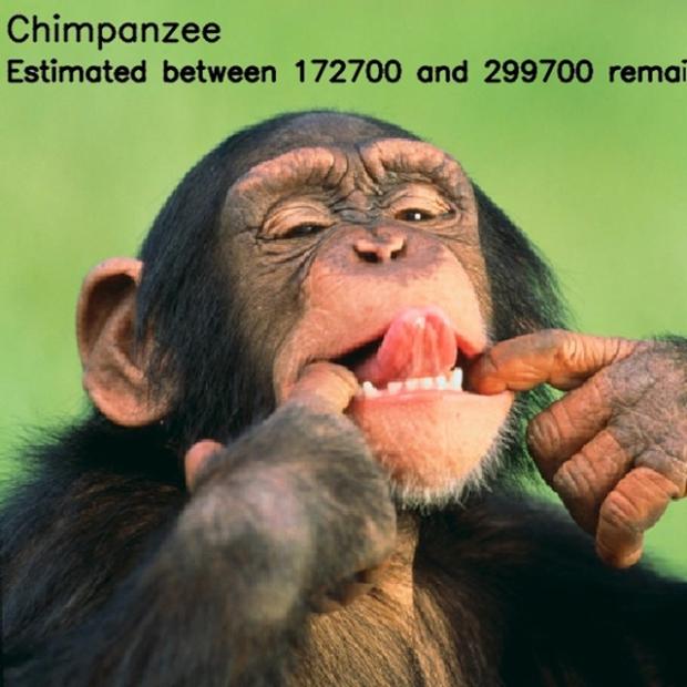 Inspirationsgraphiques-ecologie-WWF-artiste-JJSmooth44-photographie-animaliere-pixel-espece-menacee-preservation-sensibilisation-07