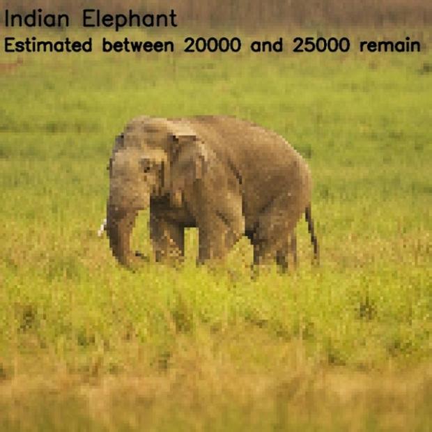 Inspirationsgraphiques-ecologie-WWF-artiste-JJSmooth44-photographie-animaliere-pixel-espece-menacee-preservation-sensibilisation-08