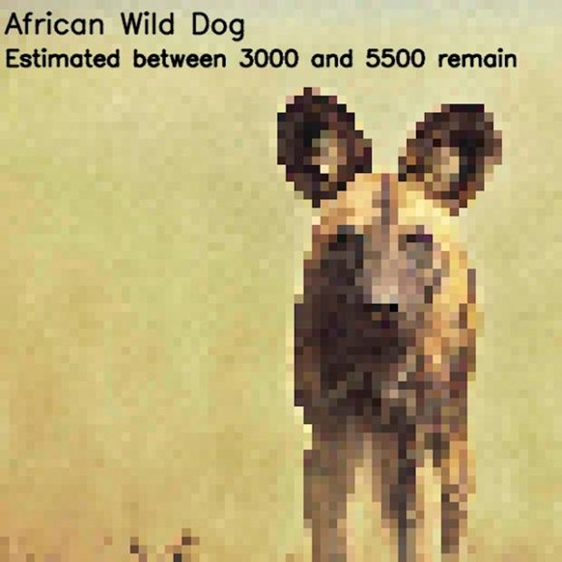 Inspirationsgraphiques-ecologie-WWF-artiste-JJSmooth44-photographie-animaliere-pixel-espece-menacee-preservation-sensibilisation-09