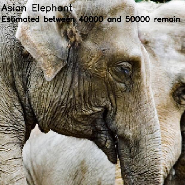 Inspirationsgraphiques-ecologie-WWF-artiste-JJSmooth44-photographie-animaliere-pixel-espece-menacee-preservation-sensibilisation-10