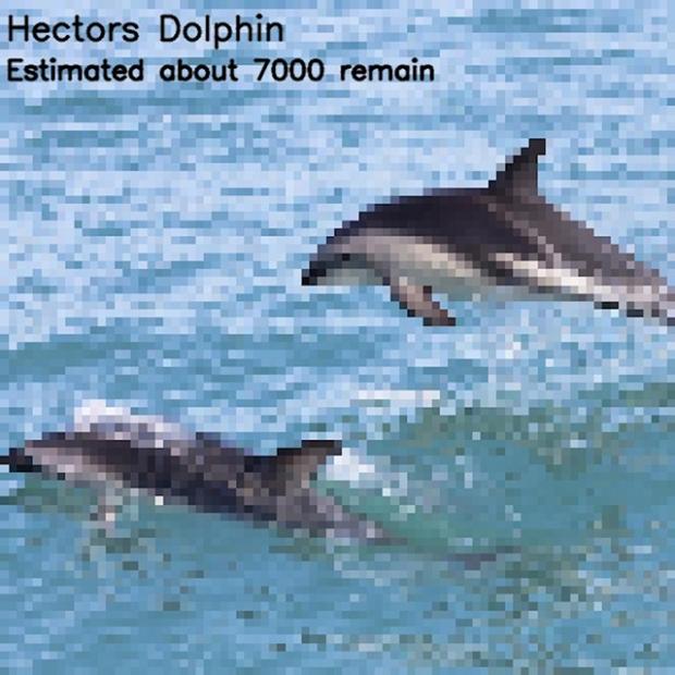 Inspirationsgraphiques-ecologie-WWF-artiste-JJSmooth44-photographie-animaliere-pixel-espece-menacee-preservation-sensibilisation-11