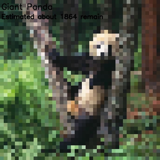 Inspirationsgraphiques-ecologie-WWF-artiste-JJSmooth44-photographie-animaliere-pixel-espece-menacee-preservation-sensibilisation-12